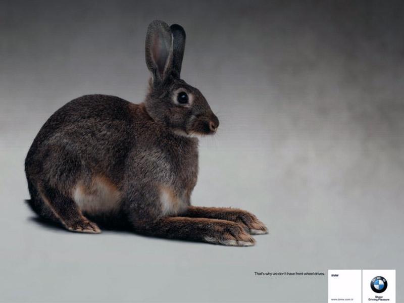 Name:  bunny.jpg Views: 807 Size:  55.3 KB