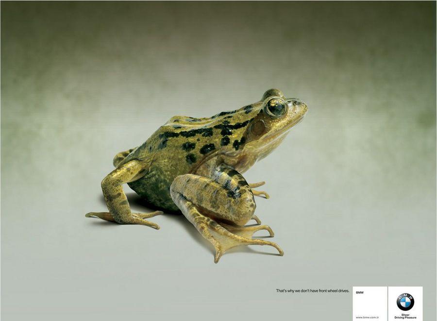 Name:  frog.jpg Views: 806 Size:  45.8 KB