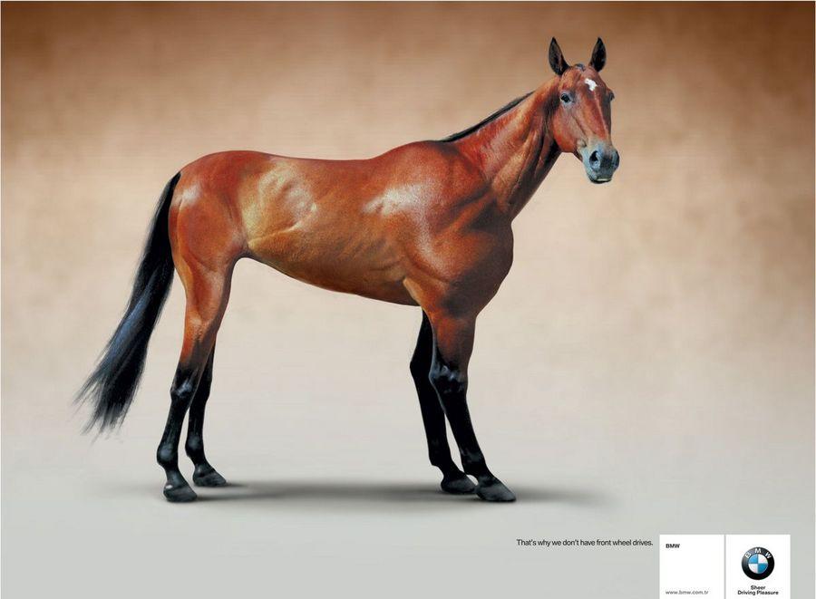 Name:  horse.jpg Views: 806 Size:  47.7 KB